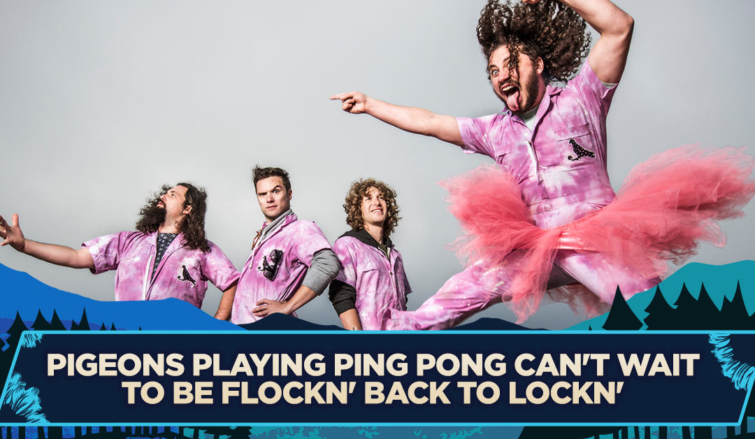 Pigeons Playing Ping Pong Can't Wait to be FLOCKN' Back to LOCKN'